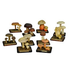 Ten Vintage Mushroom Teaching Models Scientific Specimen