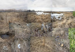 Markham Prairie, March, April and June