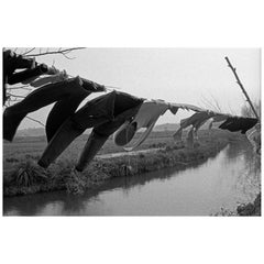 """The Clothesline"" Black & White Photography Gelatin Silver Print by A.M.Cortesão"