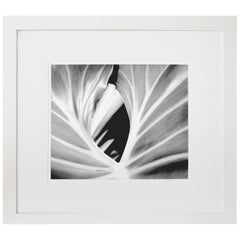 The Leaf, Framed Black and White Nature Photograph