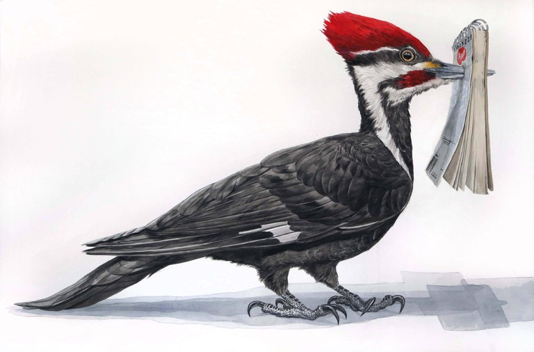 """Signed on reverse, 40""""x60"""" available unframed.  This large scale watercolor painting, entitled """"Woodpecker Sketch"""" is a larger than life depiction of a Woodpecker who has humorously caught its beak in a sketchbook. Painted with incredible detail,"""