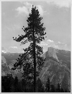 """""""Tree & Half Dome (Yosemite National Park, CA)"""" Photograph signed by T Ferderbar"""