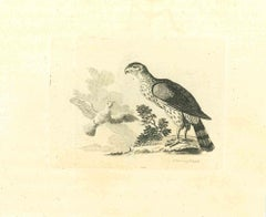 The Birds - Original Etching by Thomas Holloway - 1810