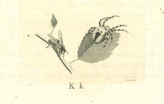 The Physiognomy- Insects - Original Etching by Thomas Holloway - 1810