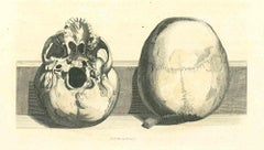 The Physiognomy - Skulls - Original Etching by Thomas Holloway - 1810