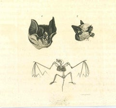 The Physiognomy - The Bats - Original Etching by Thomas Holloway - 1810