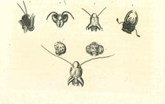 The Physiognomy - The Insects - Original Etching by Thomas Holloway - 1810