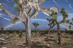 Other Desert Cities, Joshua Tree, CA, 2018