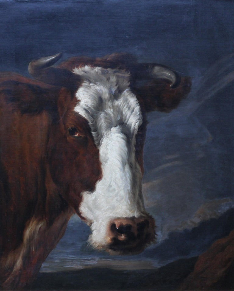 Head of a Shorthorn Cow Portrait - British Victorian art animal oil painting - Painting by Thomas Sidney Cooper RA
