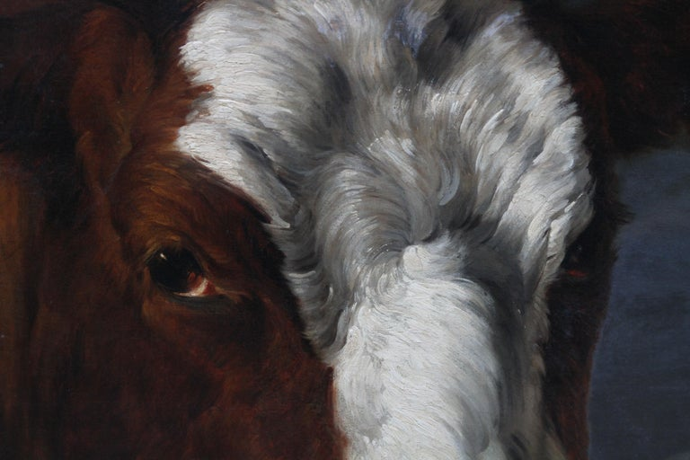 Head of a Shorthorn Cow Portrait - British Victorian art animal oil painting For Sale 2