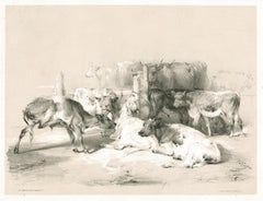 At Smithfield Market, tinted lithograph of cattle, by Thomas Sydney Cooper, 1837