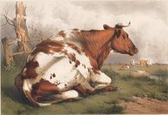 Resting Bull Lithograph