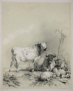 Stock, tinted lithograph of cattle and sheep, by Thomas Sydney Cooper