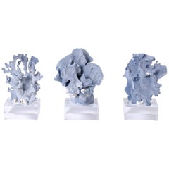Blue Coral Specimens on Lucite