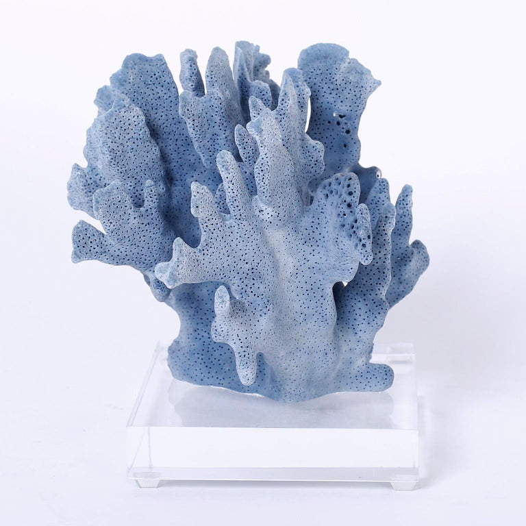 Here are three blue coral specimens each with its own organic sea inspired form, texture, and alluring blue colors. Presented on Lucite stands to enhance the sculptural elements. Priced individually.   Measures: From left to right:  Ref: BL07 H