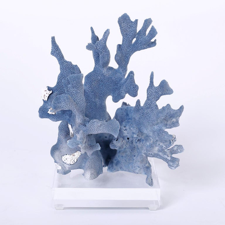 Three Blue Coral Specimens on Lucite In Good Condition For Sale In Palm Beach, FL
