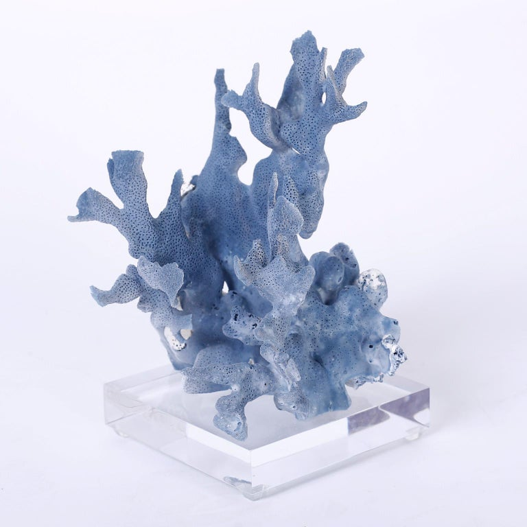 Contemporary Three Blue Coral Specimens on Lucite For Sale