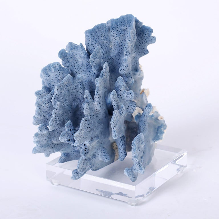 Three Blue Coral Specimens on Lucite For Sale 3