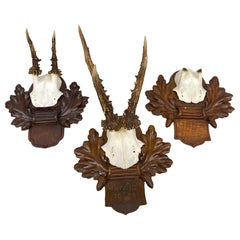 Three Deer Antler Mount Trophy on Black Forest Carved Wood Plaque from Austria