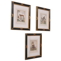 Three Framed Antique Hand Colored Monkey Engravings - Early 19th Century