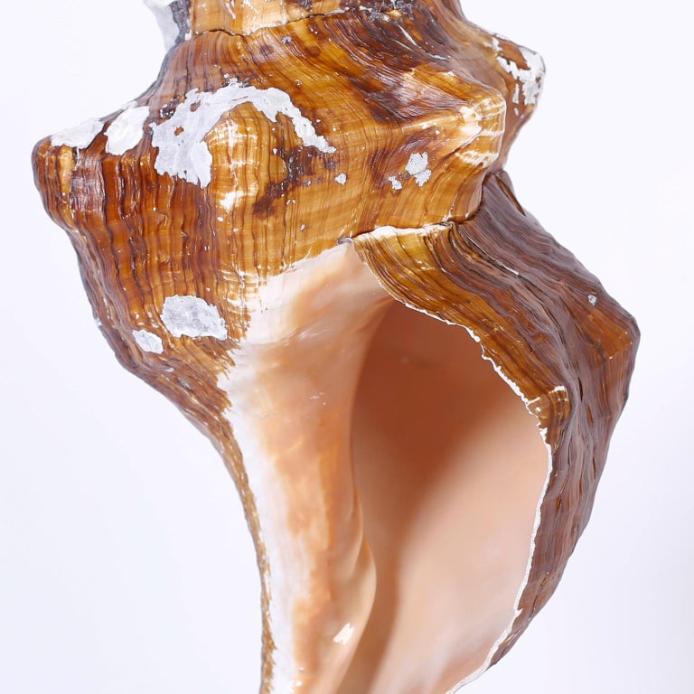 Three Seashell Specimens on Lucite For Sale 1
