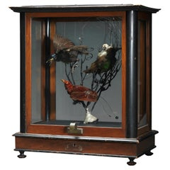 Three Victorian Birds of Paradise in a Vintage Case