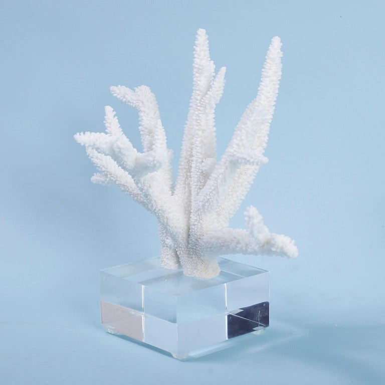 Solomon Islands Three White Coral Specimens on Lucite For Sale