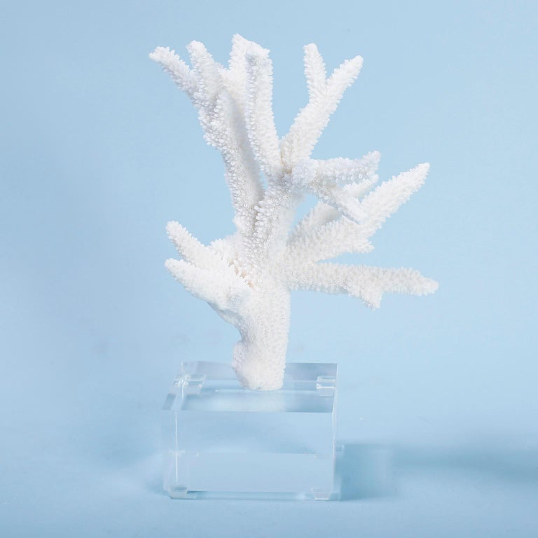 Three White Coral Specimens on Lucite For Sale 1