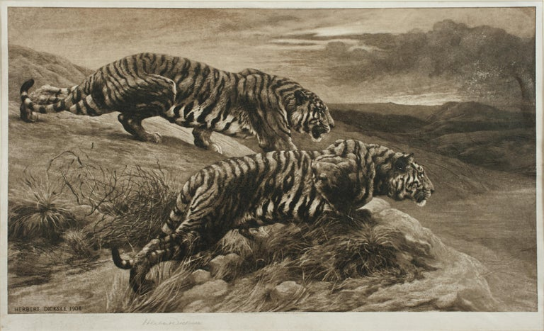 Sporting Art Tiger Etching by Herbert Dicksee, the Destroyers For Sale