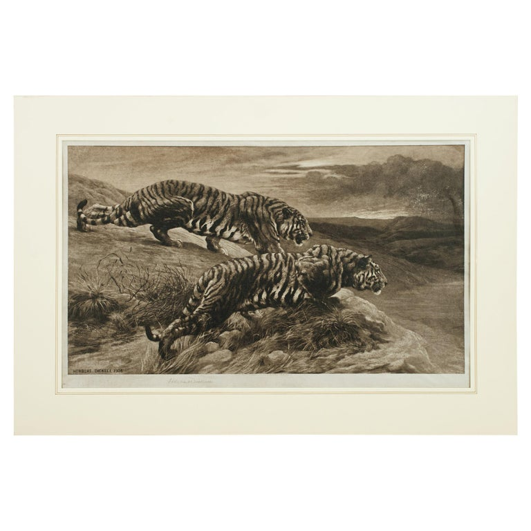 Tiger Etching by Herbert Dicksee, the Destroyers For Sale