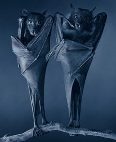 Egyptian Bat - Contemporary British Art, Animal Photography, Birds, Wings