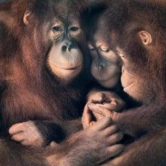 Family Group - Contemporary British Art, Animal Photography, Monkeys, Portraits