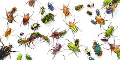 Flower Beetles - Contemporary British Art, Animal Photography, Insects, Colour