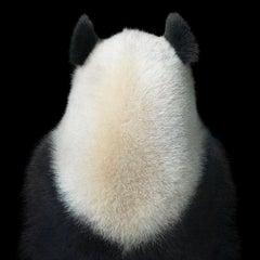 Ji Li Lucky - Contemporary British Photography, Pandas, Bears, Animal, China