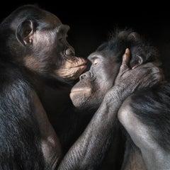 Kissing - Contemporary British Art, Animal Photography, Monkeys, Primate imagery