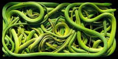 Rough Green Snakes - Contemporary British Photography, Nature, Animals, Imagery