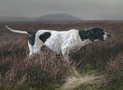 Stoic Point - Landscape, Photography, Nature, Fields, Dogs, Portrait, Scotland