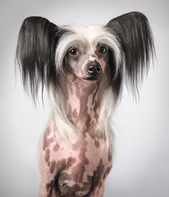 Tia - Chinese Hairless, Unusual dogs, Portrait, Photography, British artists