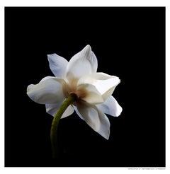 White Lotus_7