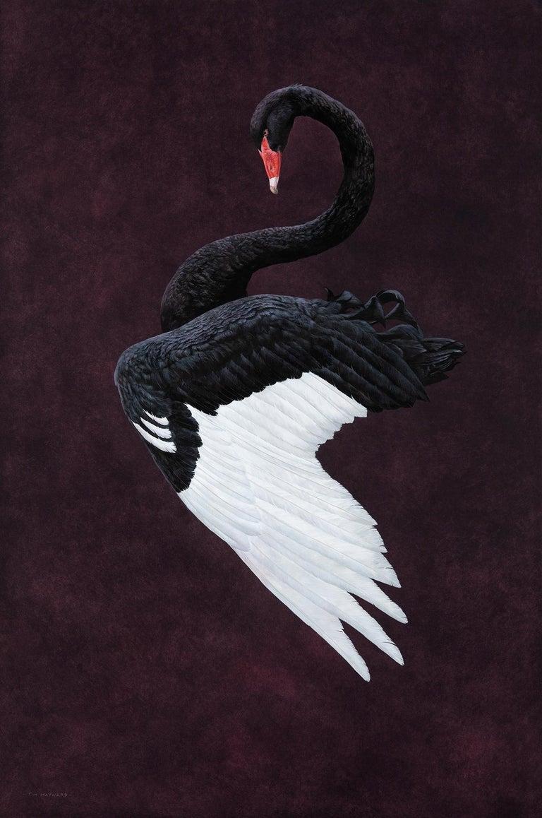 Black Swan - Aubergine - Painting by Tim Hayward