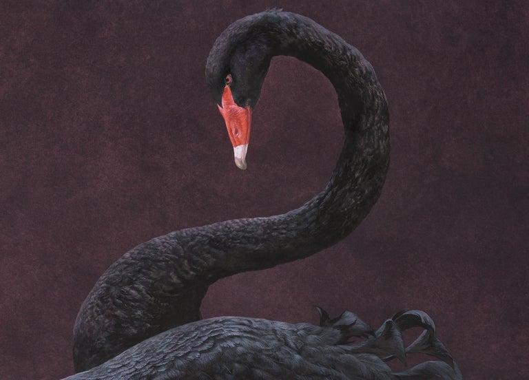 Black Swan - Aubergine 1
