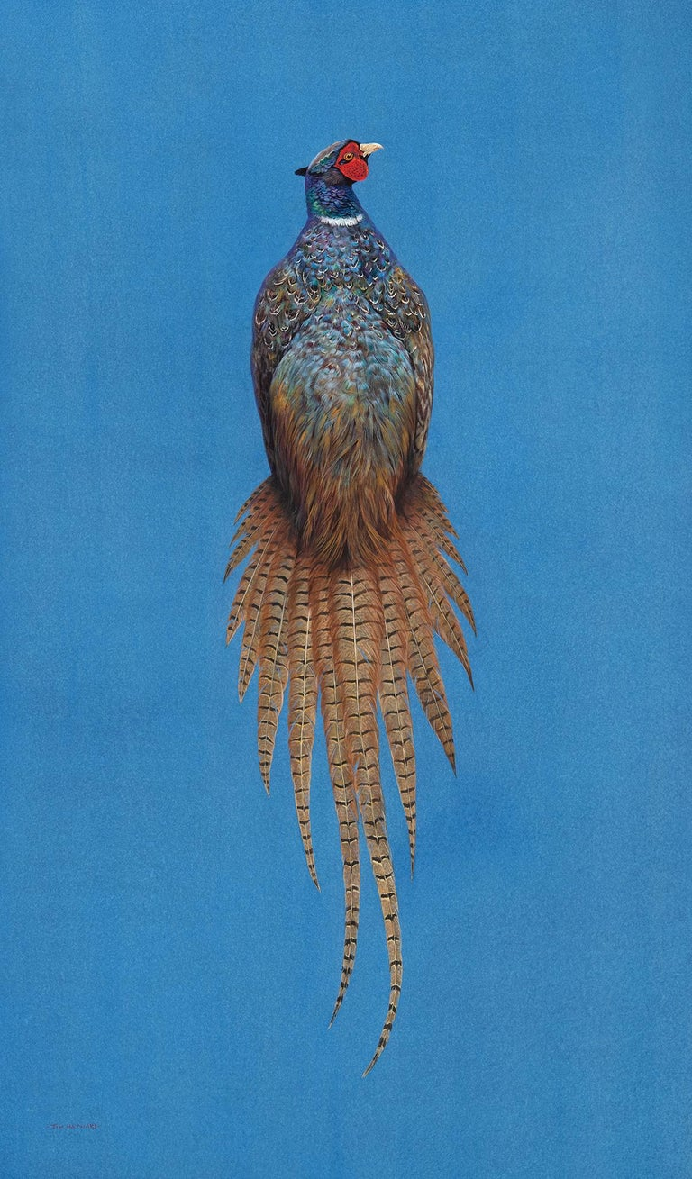 Tim Hayward Animal Painting - Ring-Necked Pheasant - Azure