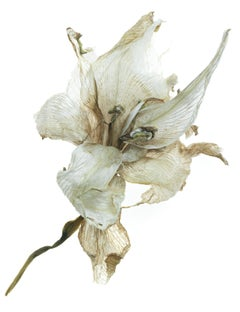 Tim Nighswander, Amaryllis #19, archival pigment print, floral still life, 2019