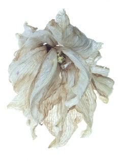 Tim Nighswander, Amaryllis #26, archival pigment print, floral still life, 2019