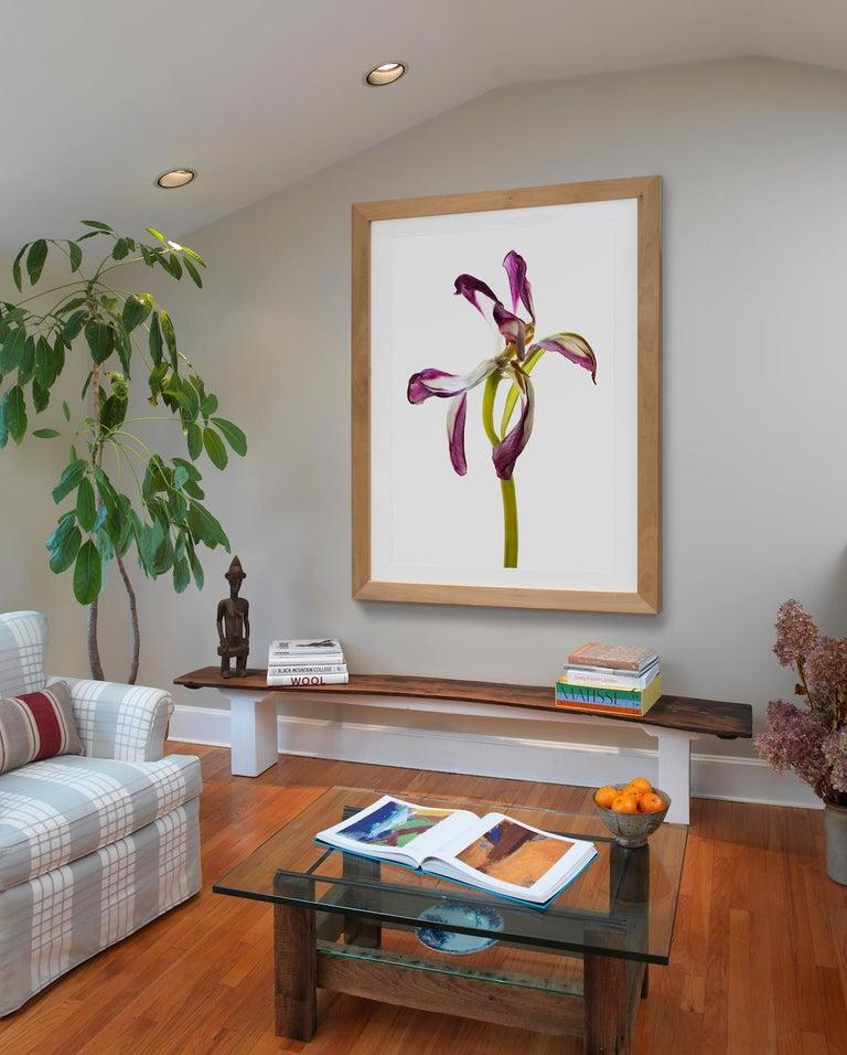 Tim Nighswander, Tulip #98, trompe-loeil floral still life photograph, 2018 For Sale 1