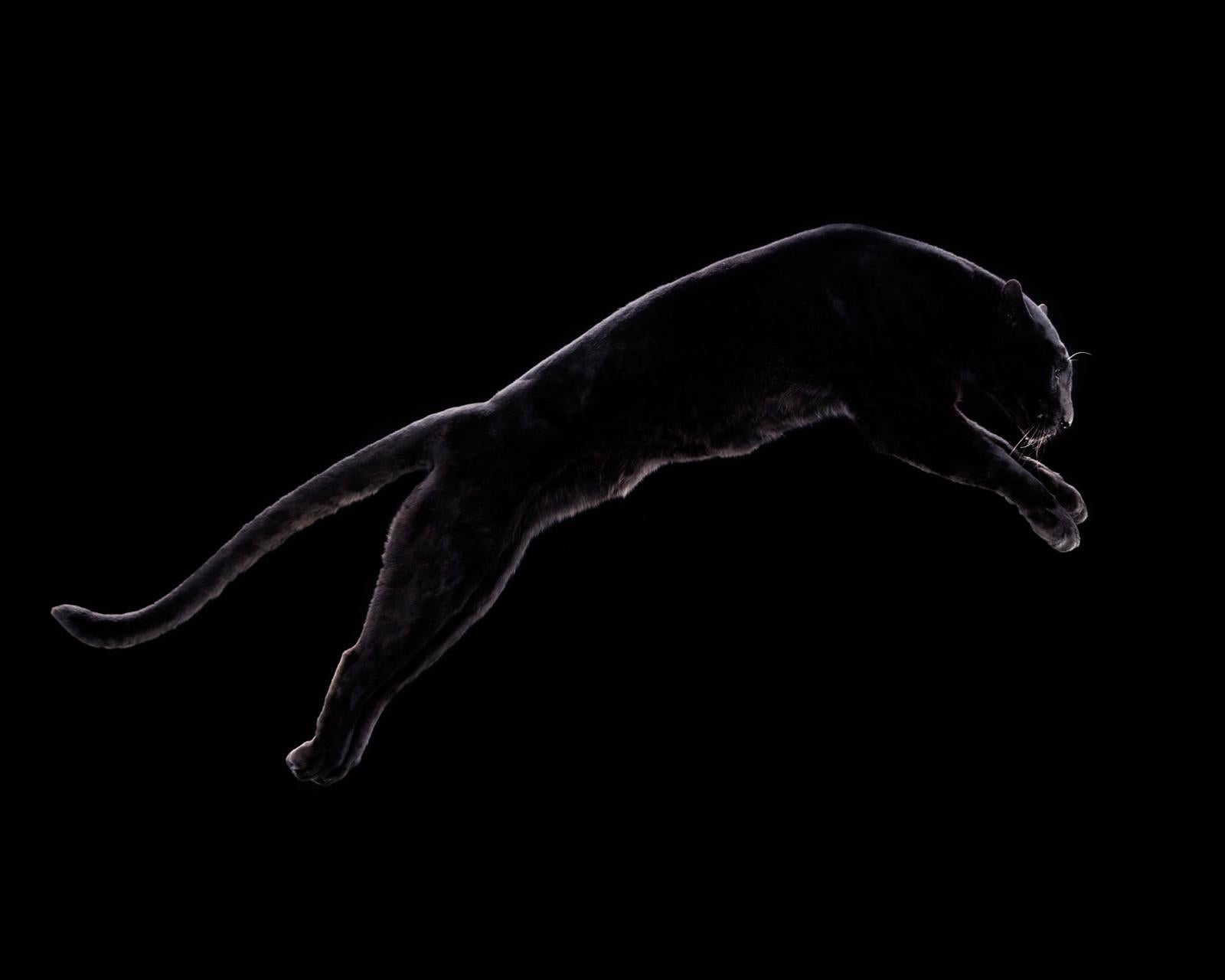 """ Leopard #3 ""- Signed limited edition fine art print ,black leopard, jaguar"