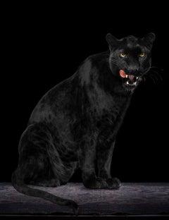 """ Leopard #4 ""- Signed limited edition fine art print ,black leopard, jaguar"