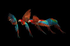 """"""" Macaw #1 """" -  Signed limited edition fine art print"""