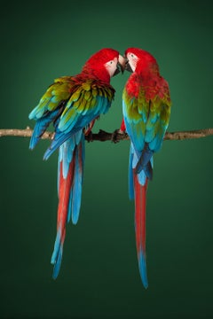 """ Macaw #2 "" -  Signed limited edition fine art print"