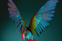 """"""" Macaw #3 """" -  Signed limited edition fine art print"""